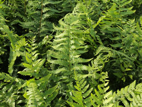Dixie Woodfern